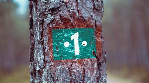 Close-up picture of a tree trunk with the number 1 painted onto the trunk.